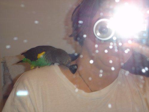 birdoffyourshoulder